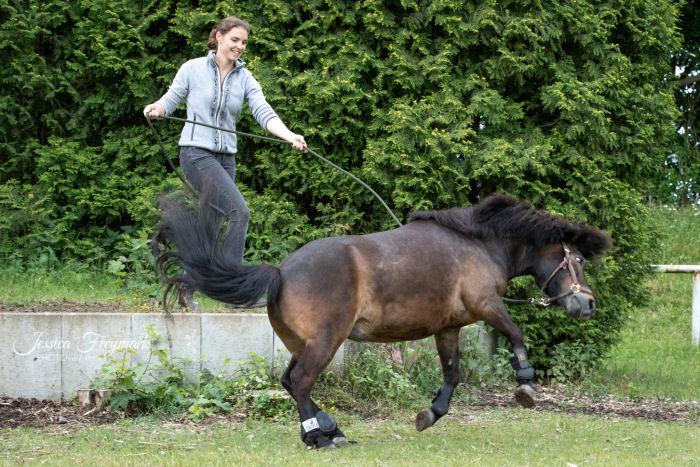 Pony buckelt