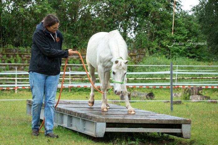 Pony auf der Wippe