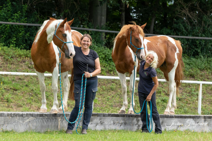 Zwei Pferde auf dem Steg
