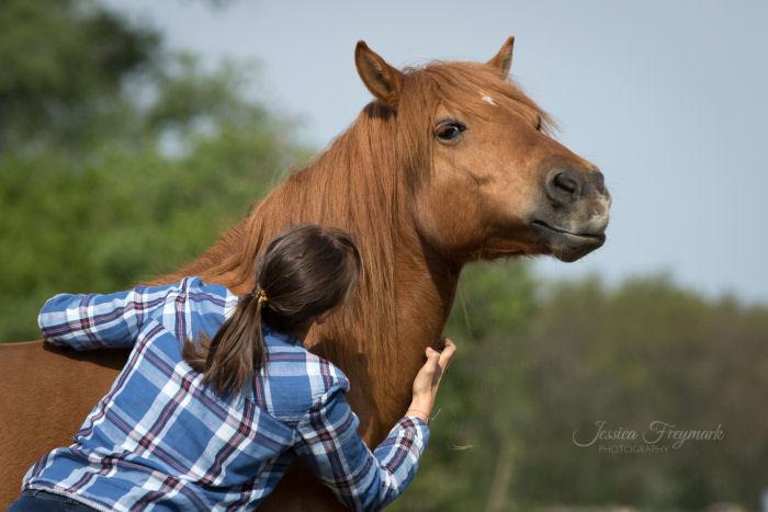 Mensch krault Pferd