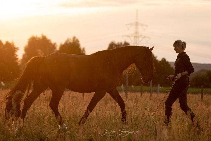 Pferd und Mensch bei der Freiarbeit im Sonnenuntergang