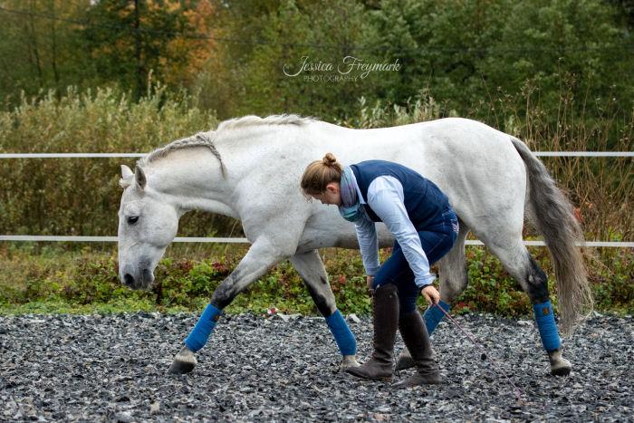Pferd spiegelt die Haltung des Menschen im Trab