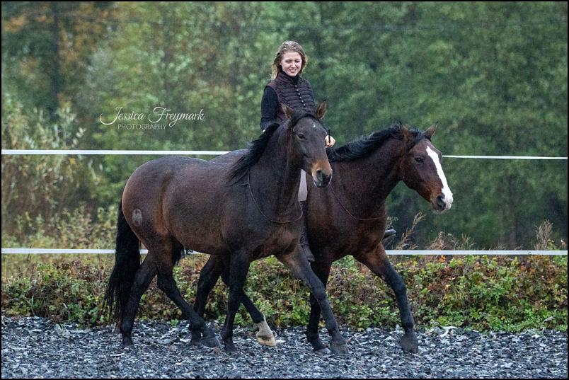 Hero Merkel mit 2 Pferden at Liberty