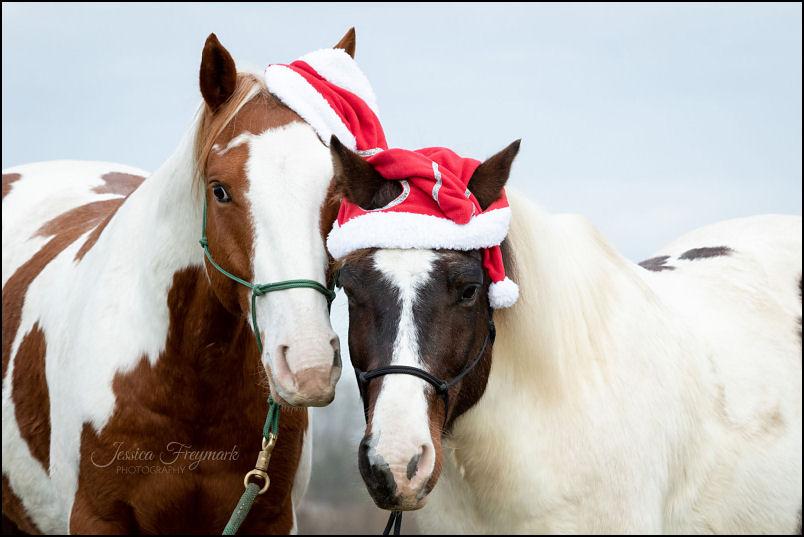 Jack und Janek mit Weihnachtsmütze